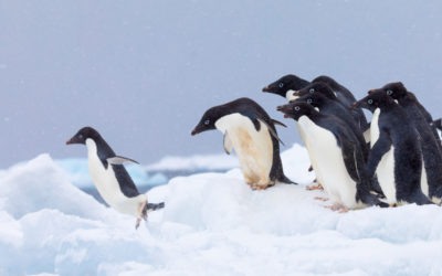 Win A Trip To Antarctica With Omaze
