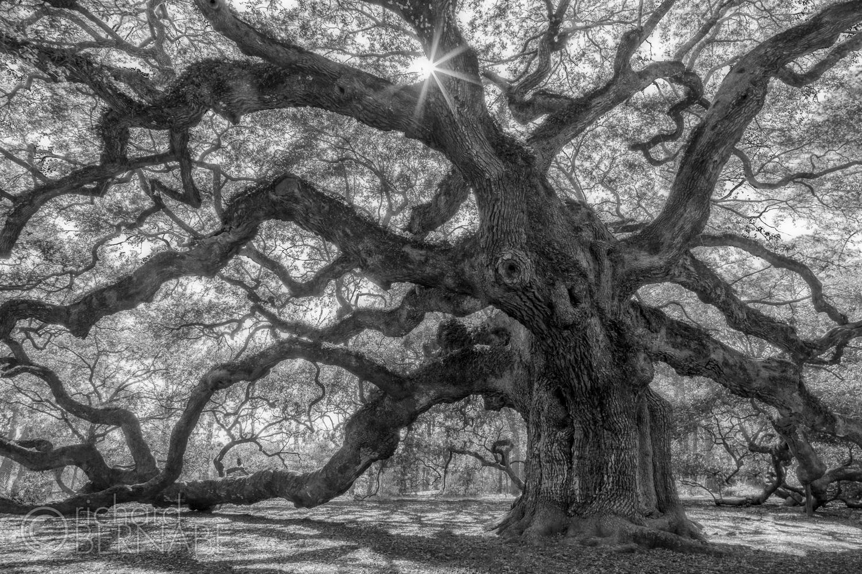 Behind The Lens: The Angel Oak
