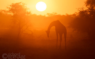 Essential Photography: Embrace Backlight