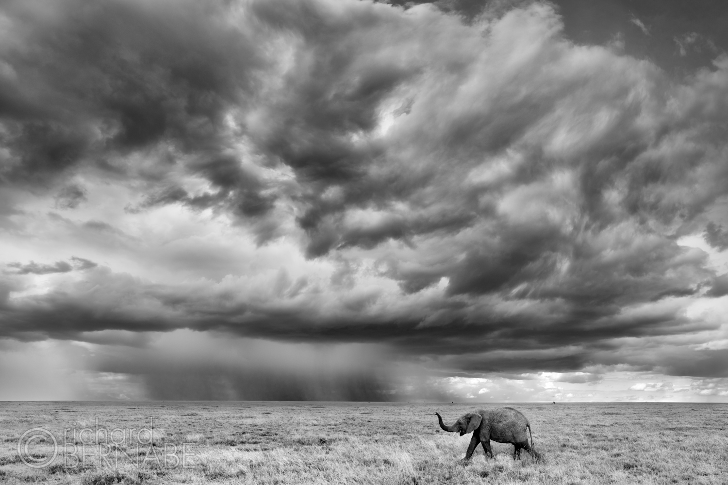 Compelling Wildlife Photography
