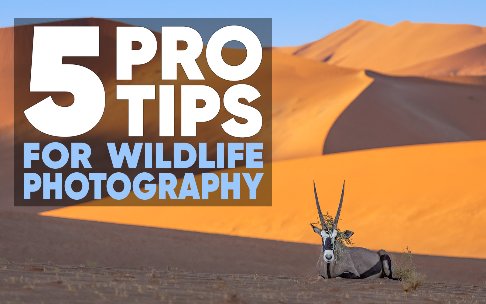 5 Pro Tips For Wildlife Photography