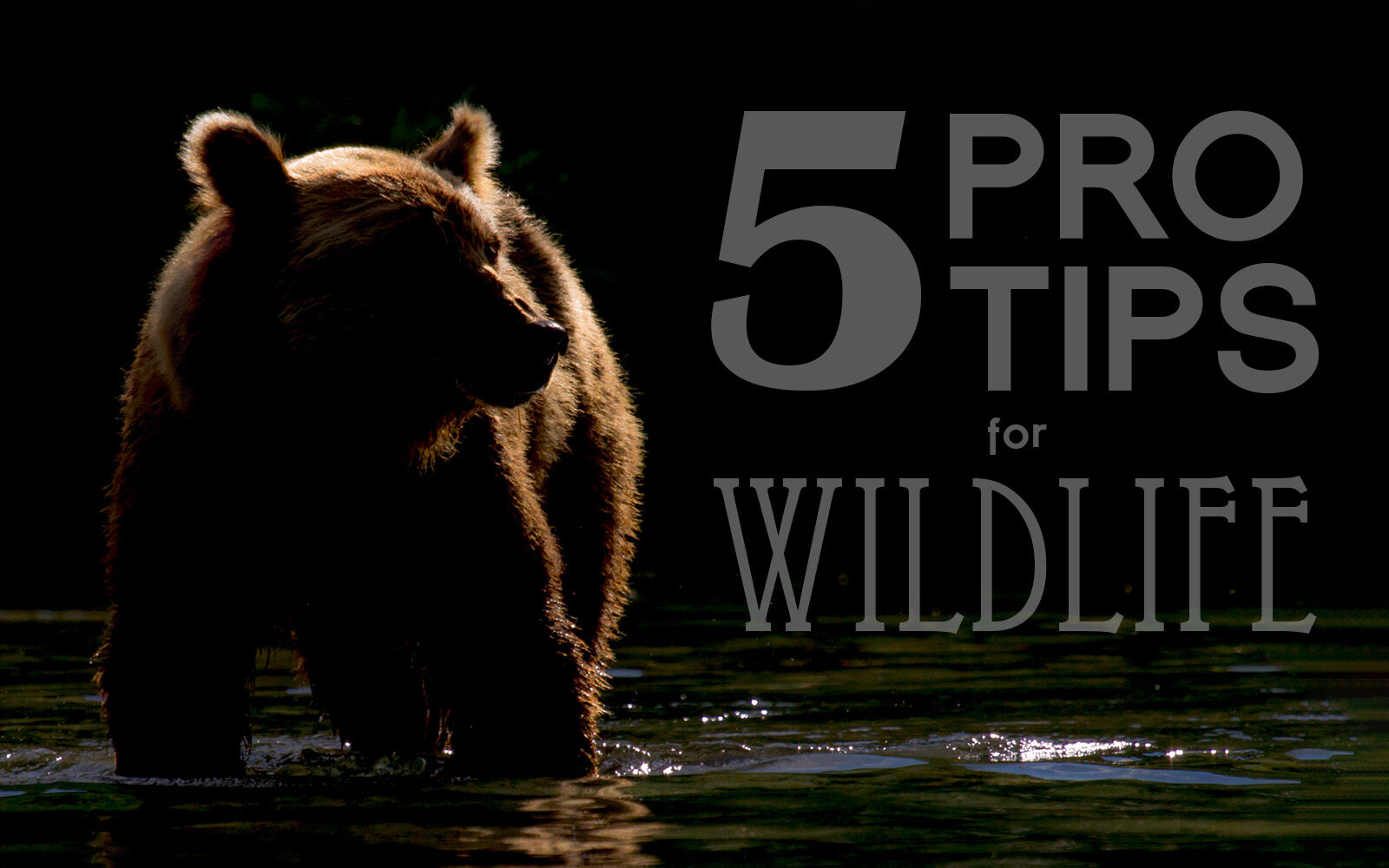 5 Pro Tips For Compelling Wildlife Photography